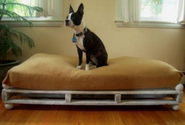 como-celebrar-dia-del-perro-pale-cama-la-nubes-de-algodon