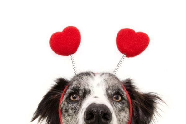 como-celebrar-dia-del-perro-perro-diadema-corazones-istock