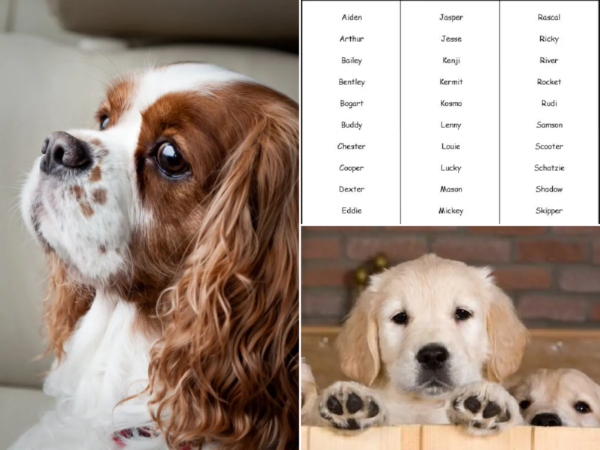 Los Mejores Nombres Para Perros Animalesmascotas