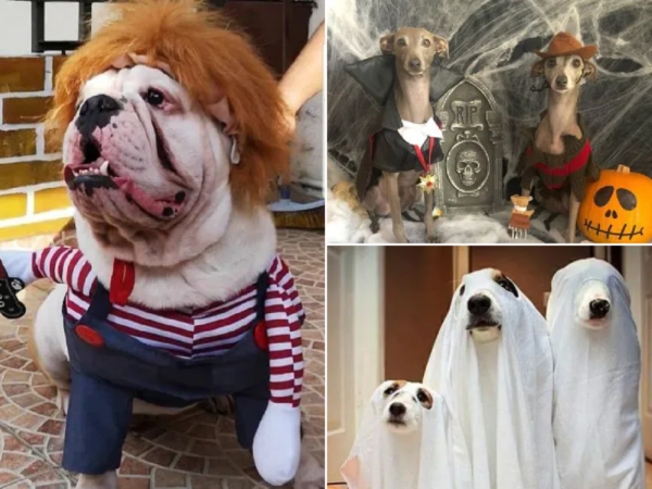 Disfraces caseros para mascotas