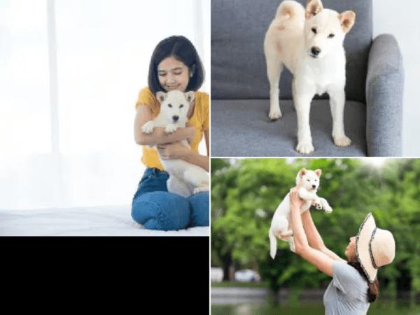 perros-hokkaido