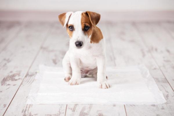 Cachorro baño