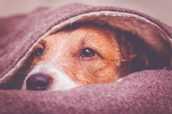 Cuidados de mascotas en invierno