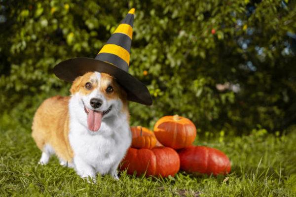 Disfraces caseros para mascotas carnaval disfraz brujo