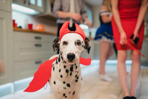 Disfraces caseros para mascotas carnaval disfraz demonio
