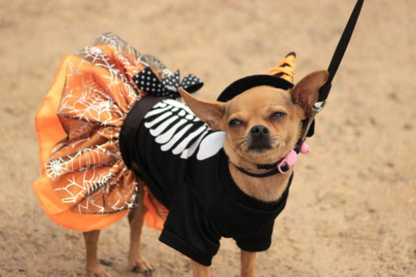 Disfraces caseros para mascotas carnaval disfraz esqueleto