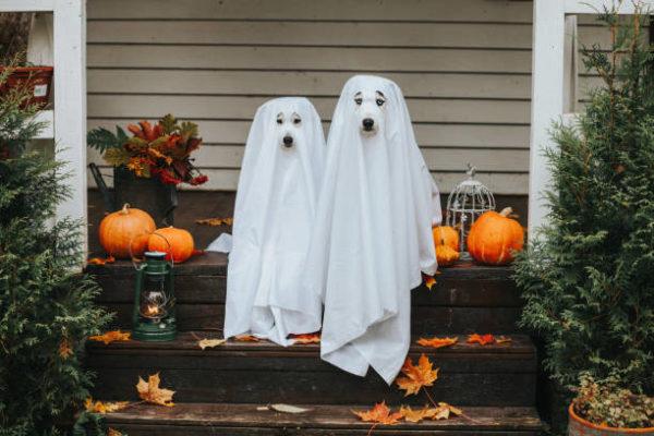 Disfraces caseros para mascotas carnaval disfraz fantasmas