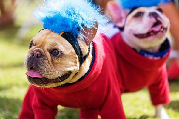 Disfraces caseros para mascotas carnaval disfraz llamativo