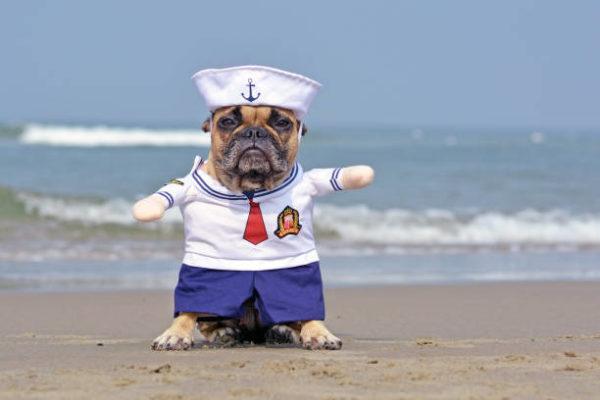 Disfraces caseros para mascotas carnaval disfraz marinero
