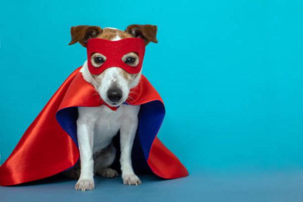 Disfraces caseros para mascotas carnaval disfraz superman