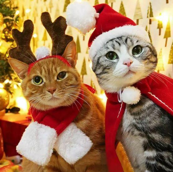 gatos disfrazados navidad