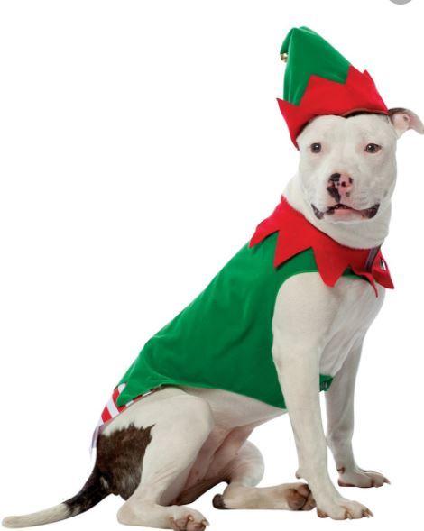 disfraz perro pitbull duende