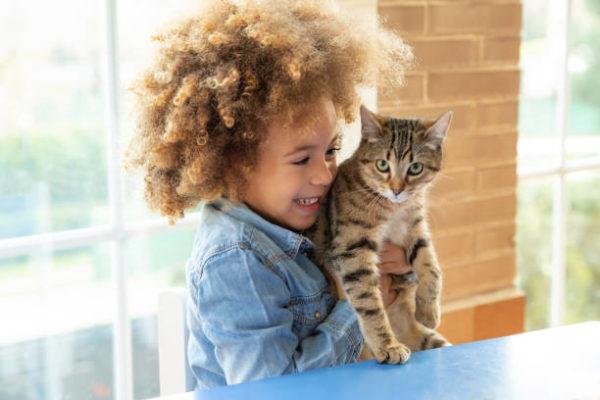 Gato europeo cuidado caracteristicas fotos gato con niño