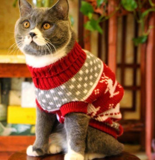 jersey navidad gato