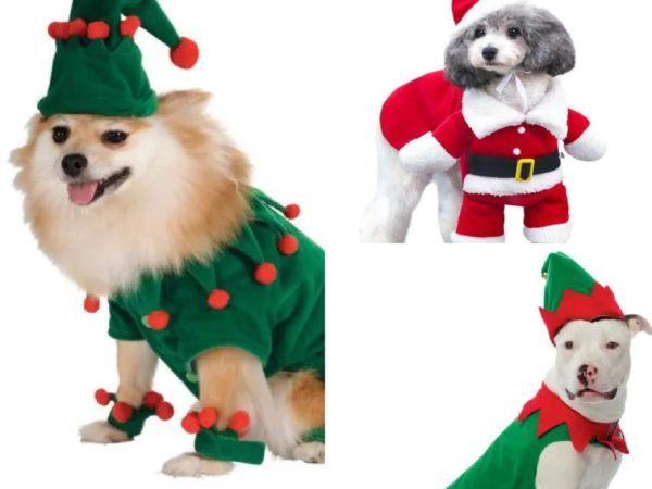 disfraces caseros navidad para perros