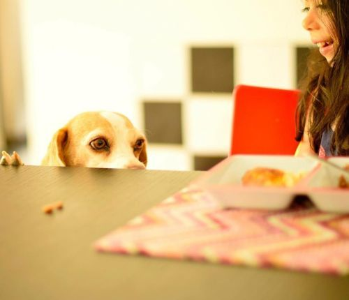 Perro asomado a la mesa