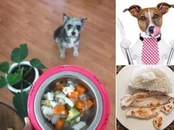 Recetas caseras y saludables para perros