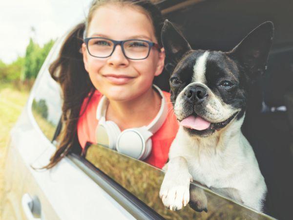 Perros boston terrier caracteristicas cuidados viajando con nina en coche