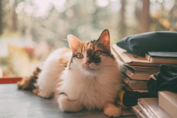 Como educar gato consejos trucos y errores