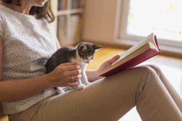 Como educar gato