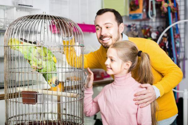 Como elegir mejor jaula cada tipo de pajaro
