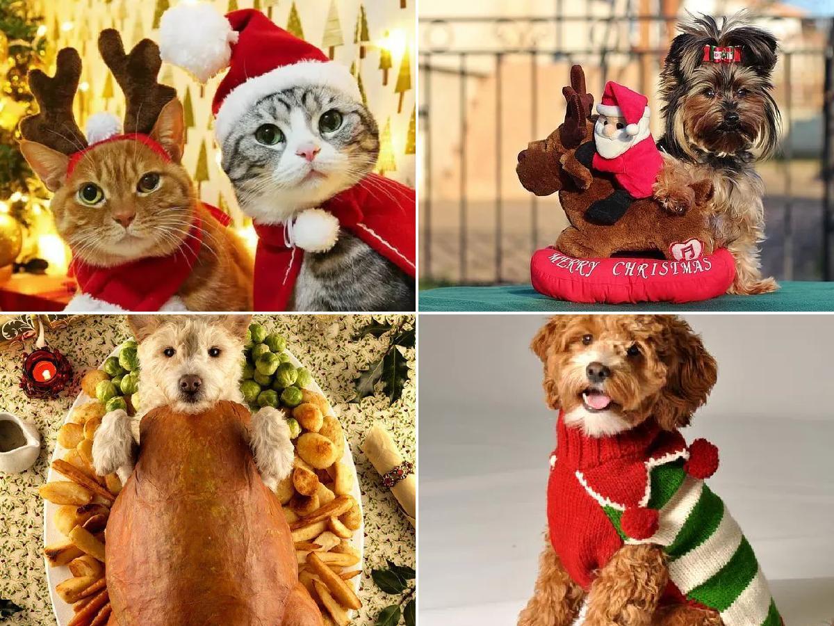 Disfraces para mascotas de Navidad