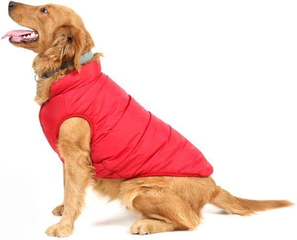 Los mejores consejos para proteger a nuestros perros del frío y la nieve abrigo rojo