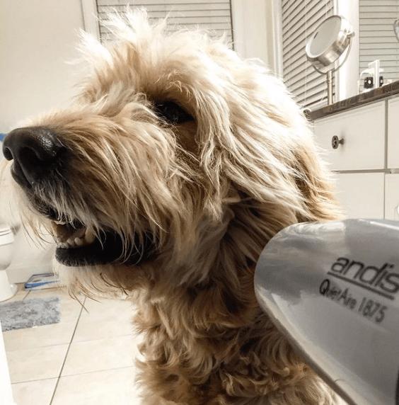 Los mejores consejos para proteger a nuestros perros del frío y la nieve secador en casa