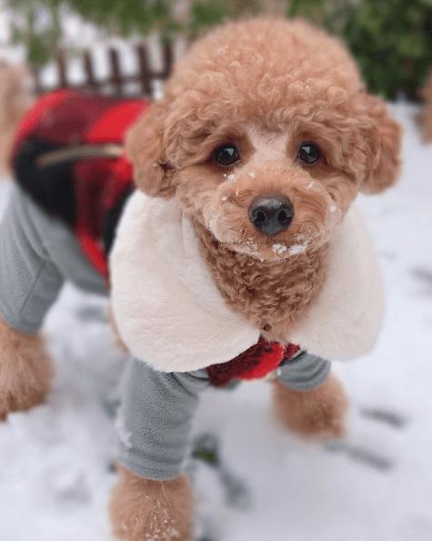 Los mejores consejos para proteger a nuestros perros del frío y la nieve abrigo para perros pequeños
