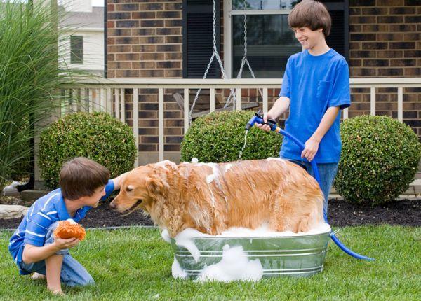 Como bañar a un perro facil en el jardin