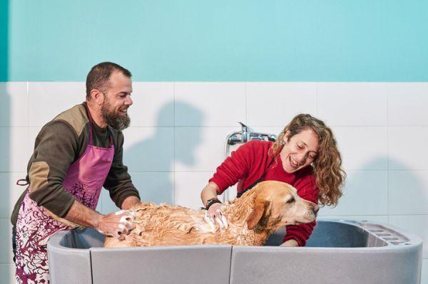 Como bañar a un perro facil pareja bañando perro