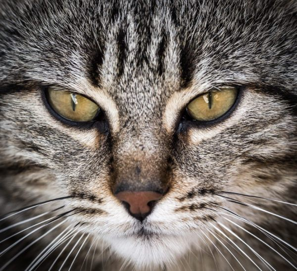 Dia internacional del gato cuando es porque se celebra cuales son las mejores formas celebrarlo