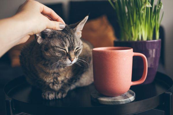 Dia internacional gato es porque se celebra cuales son las mejores formas celebrarlo