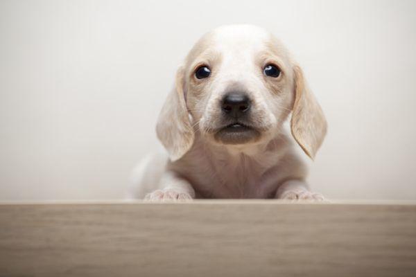Cachorrito blanco