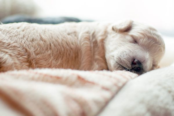 Cachorrito dormido