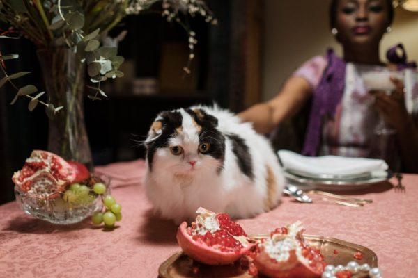 Alimentos que no puede comer tu gato posibles enfermedades gato mesa