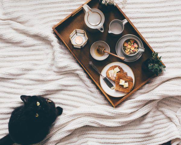 Alimentos que no puede comer tu gato posibles enfermedades gato negro