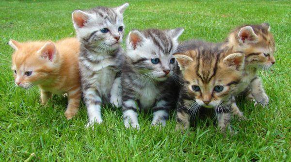 Alimentos que no puede comer tu gato posibles enfermedades gatos