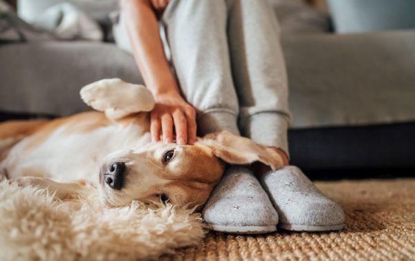 Mujer acaricia perro