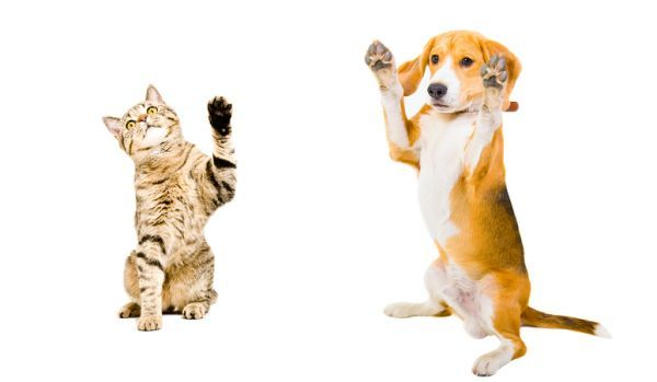 Perro con gato a dos patas