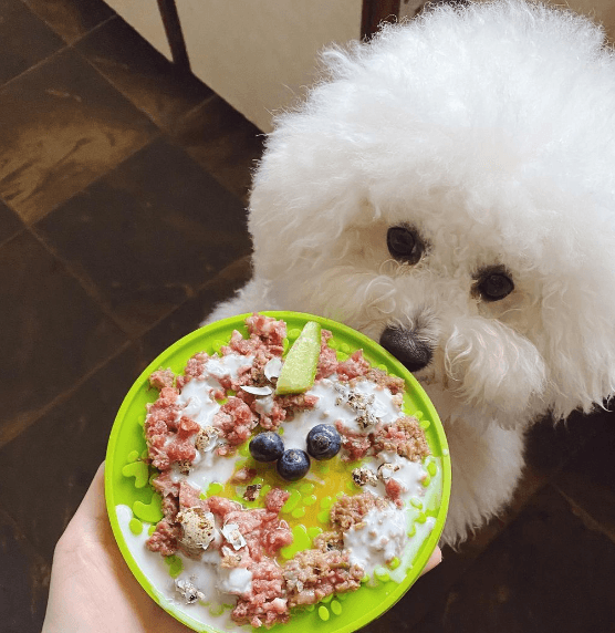 Dieta BARF para perros: qué es, cómo se hace y beneficios plato comida pelo brillante