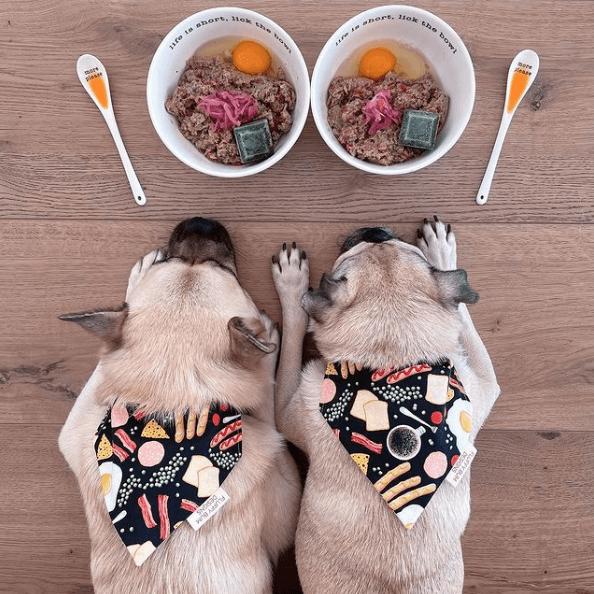 Dieta BARF para perros: qué es, cómo se hace y beneficios plato comida
