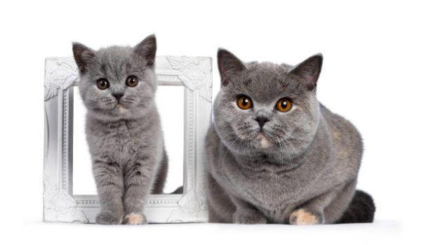 Etapas desarrollo en los gatos cuales caracteristicas