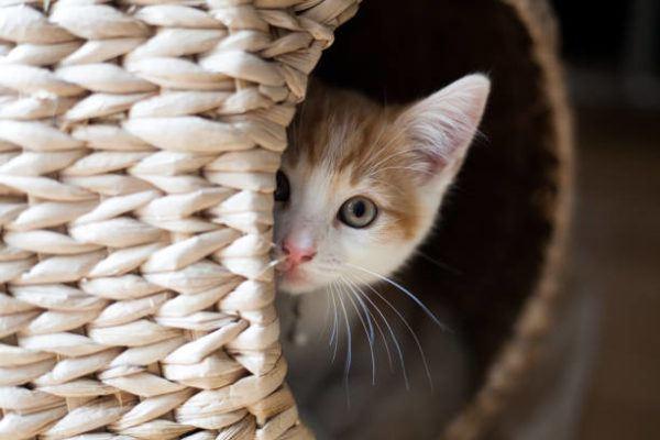 Etapas desarrollo en los gatos cuales son sus caracteristicas