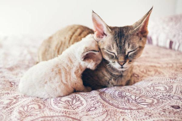 Etapas desarrollo en los gatos cuales sus caracteristicas