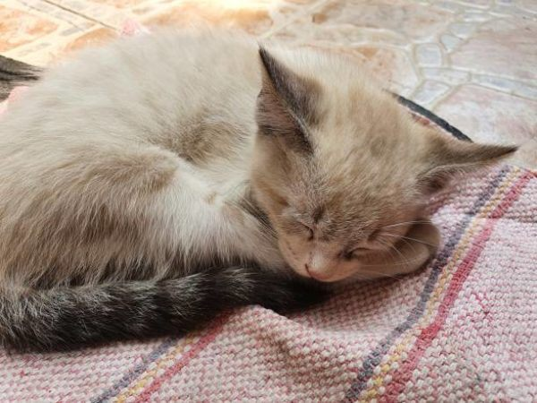 Etapas desarrollo en los gatos son sus caracteristicas