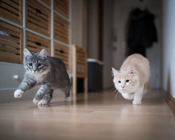 Etapas desarrollo los gatos cuales son sus caracteristicas
