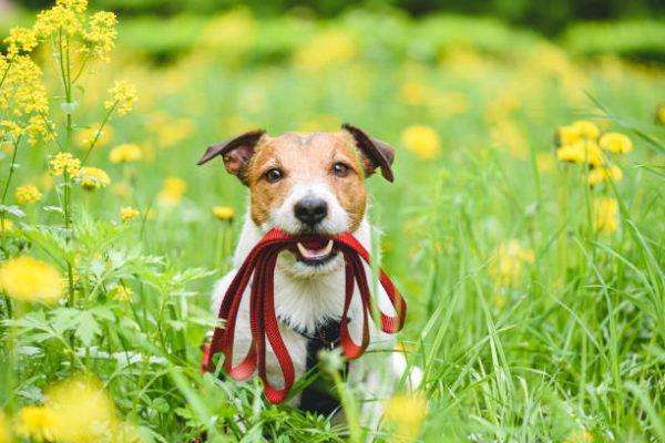 Cosas a los que los perros son alergicos moho
