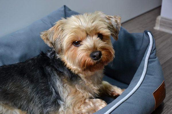 Las mejores camas de verano para perros - Las más vendidas Fuufee
