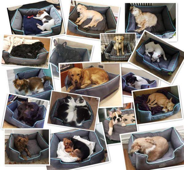 Las mejores camas de verano para perros - Las más vendidas Pecute
